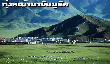 ทุ่งหญ้าบายันบูลัค Bayinbuluk Grassland