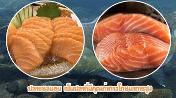 ปลาแซลมอน เป็นปลาที่มีคุณค่าทางโภชนาการสูง