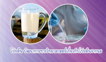 โปรตีน พัฒนาการทางวิทยาศาสตร์เกี่ยวกับโปรตีนจากนม