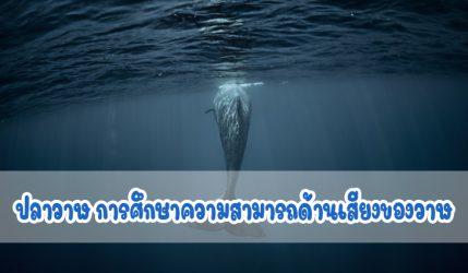 ปลาวาฬ การศึกษาความสามารถด้านเสียงของวาฬ