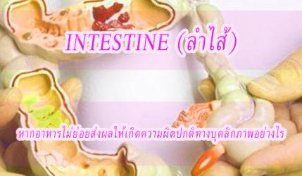 intestine (ลำไส้) อาหารไม่ย่อยส่งผลให้เกิดความผิดปกติทางบุคลิกภาพอย่างไร